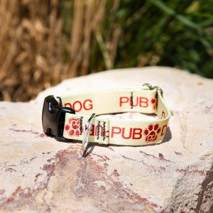 pub dog branded collar sitting on a rock
